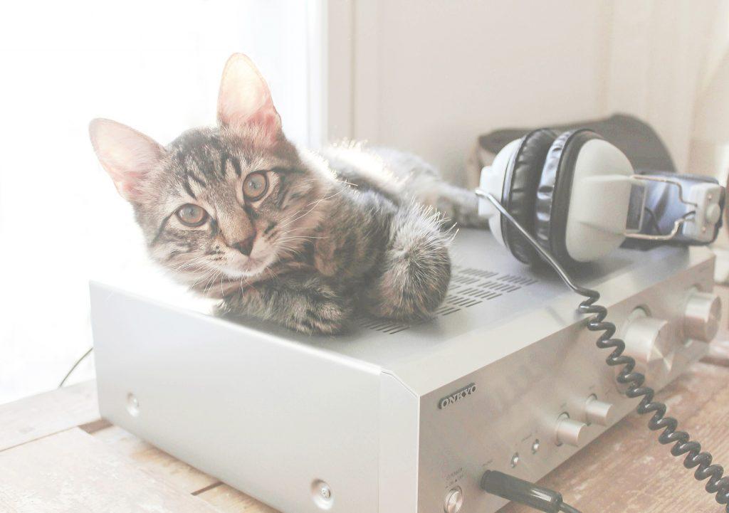 Un chat qui écoute de la musique